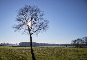 Eich in Winter von Twentse Pracht