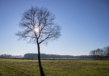 Eik in een weiland in de zon in de winter van TwentePics