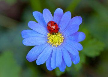 Lila bloem met Lieveheersbeestje
