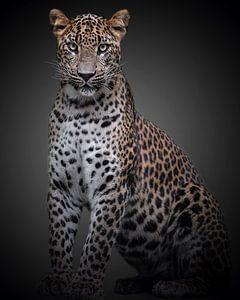 Panther mit einer Haltung