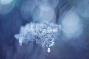 Fragile in blue