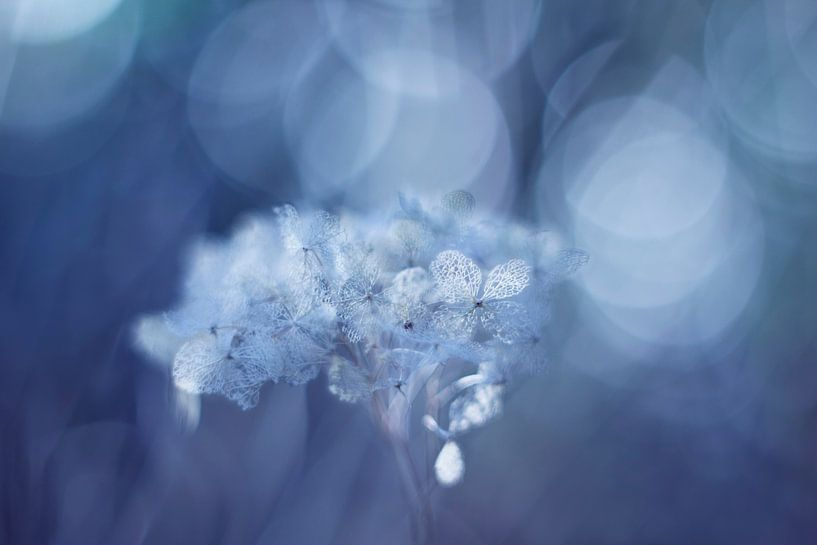 Fragile in blue van LHJB Photography