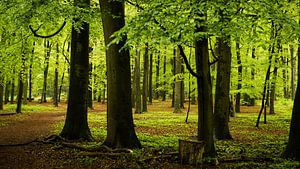 Regenachtig Bos in Lage Vuursche