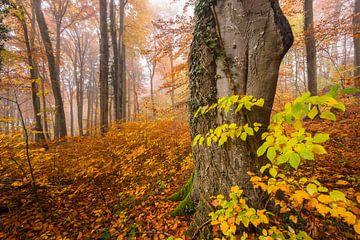 Vroeg in de ochtend in het herfstbos van Denis Feiner