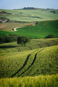 Lijnenspel in een landschap in Toscane