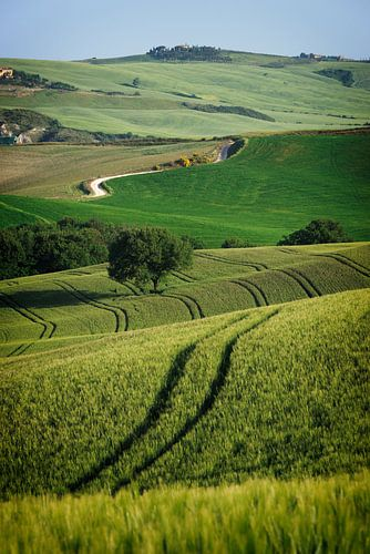 Lijnenspel in een landschap in Toscane van iPics Photography