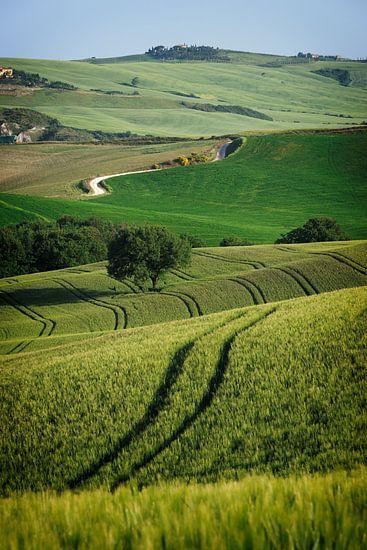Kurvenreiche Linien in der Toskana