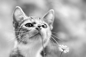 Nieuwsgierig kitten van