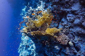 Reef at depth von Eric van Riet Paap