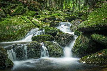 Petite chute d'eau dans la forêt verte sur Tobias Luxberg