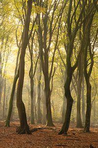 Wendungen im Wald