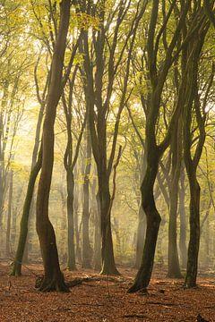 Kronkels in het bos van Albert Lamme