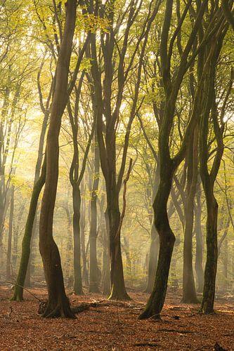 Kronkels in het bos