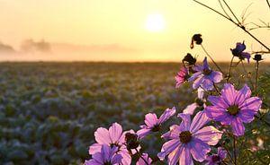 Paarse bloemen van