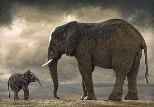 Baby olifantje van