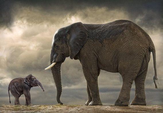 Baby olifantje van Marcel van Balken