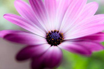 flower van Bertrik Hakvoort