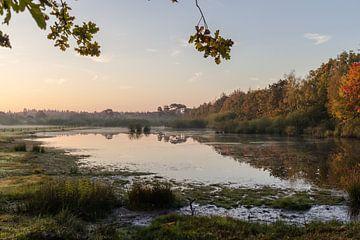 Herfst van Peter Dane