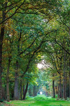 Pad in het bos van Ron Buist