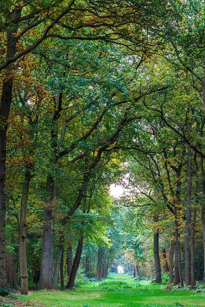 Pad in het bos sur Ron Buist