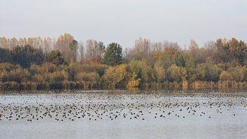 Herfst in de polder van Gerard de Zwaan