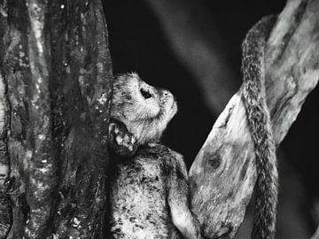 Affe von Bart van Mastrigt