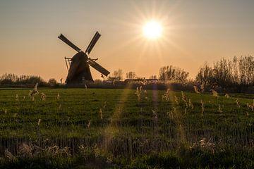 Zonsondergang bij molen van Moetwil en van Dijk - Fotografie