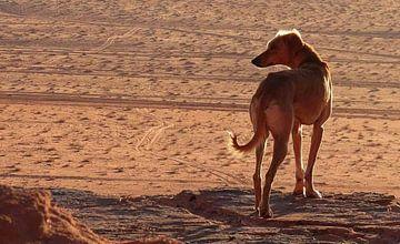 Hond van Jojanneke Vos