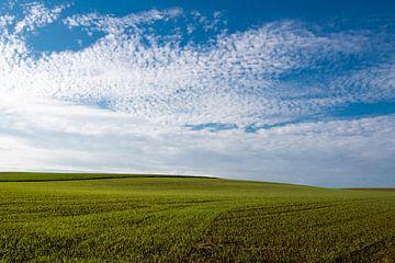 Prachtig veld met blauwe wolkjes lucht van DroomGans