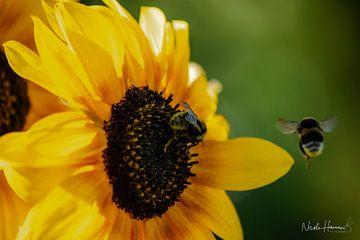 Sonnenblume von Nicole Harren