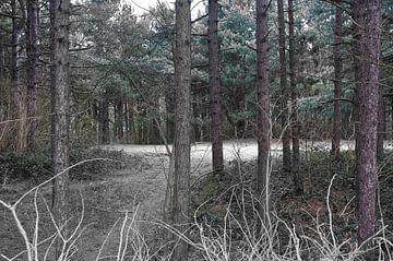 het bos van Marco Titucci