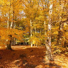 Beukenbos in gouden herfstkleuren van Marijke van Eijkeren