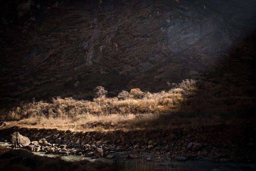 Spotlight van Ellis Peeters