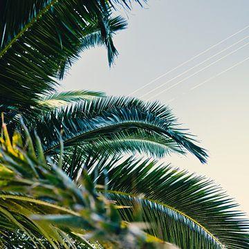 Palmenblätter von Jonathan Schöps | UNDARSTELLBAR