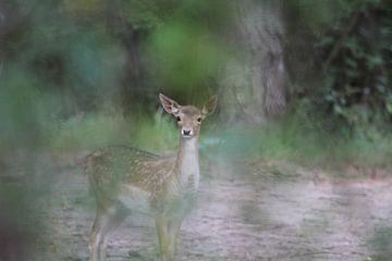 Bambie von rene marcel originals