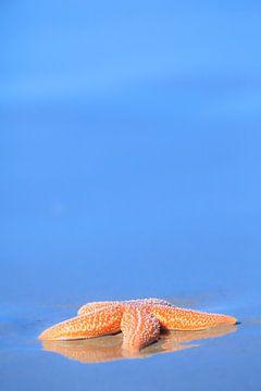 Oranje zeester op het strand in de zomer van Bas Meelker
