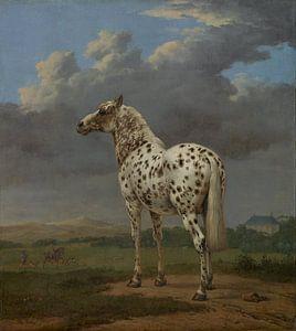 Het bonte paard, Paulus Potter