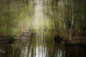 Ruhiger Bach fließt durch einen verwunschenen Wald mit Reflexionen im Wasser, Kopierraum, ausgewählt von Maren Winter