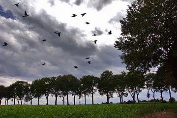 Bäume 5 von Edgar Schermaul
