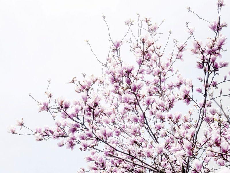 magnoliabloesem lentebloesem IV van Jessica Berendsen