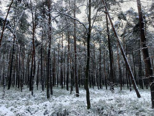 Winterbos Veluwe Eerbeek