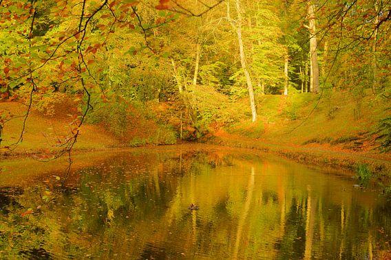 Herfstkleuren weerspiegeld in vijver van Michel van Kooten