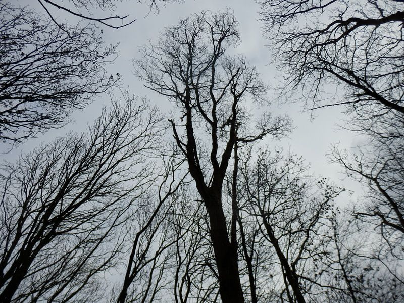 trees in black and white van Albert Iepsma
