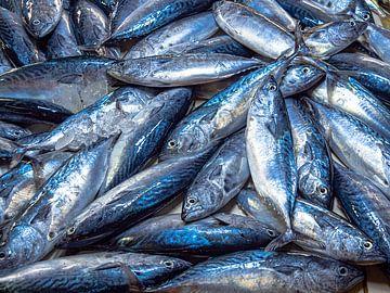 Filipijnen - Palawan - Een foto vol vis van Rik Pijnenburg
