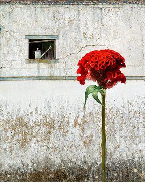 Was Aufmerksamkeit erregt, wächst von Hannie Kassenaar