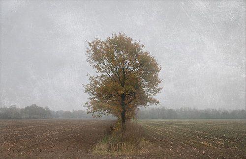 Lonely soul van