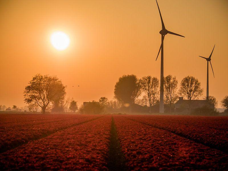 Rode Tulpen in een veld van Martijn Tilroe