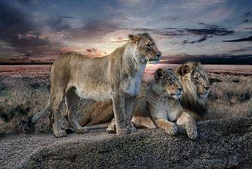 drie leeuwen van