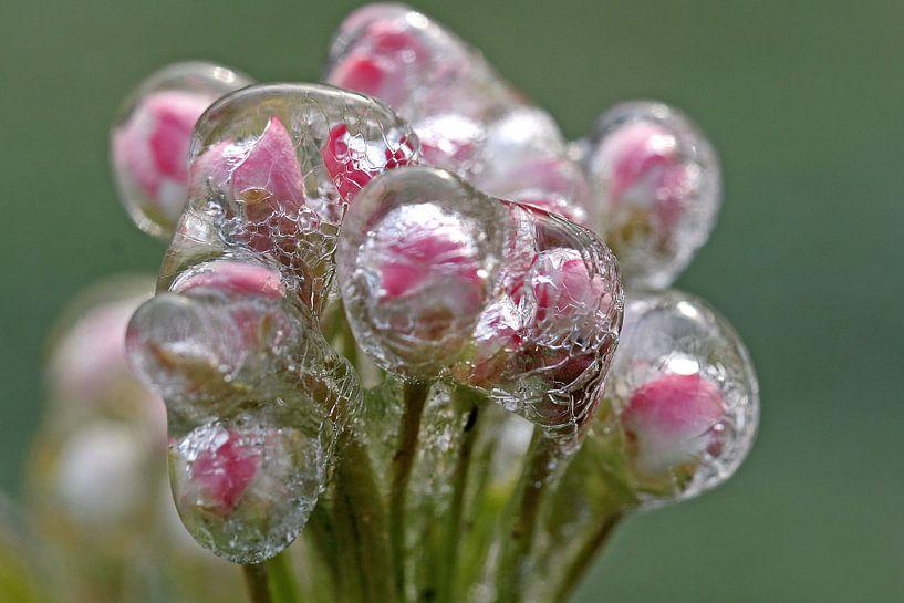 Frozen Blossom  II van Marinus de Keijzer