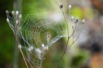 De spin in zijn web van Yrla Lucassen